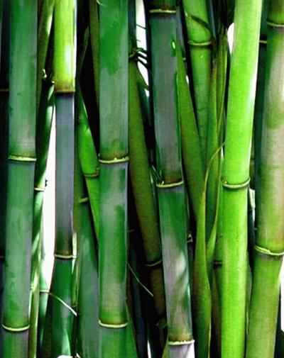 bambus sokkeposten