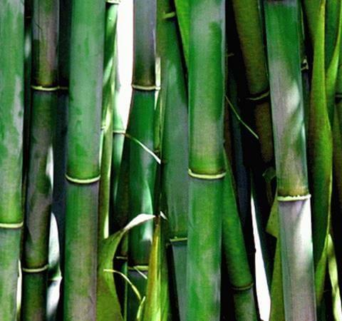 strømper med bambusfibre